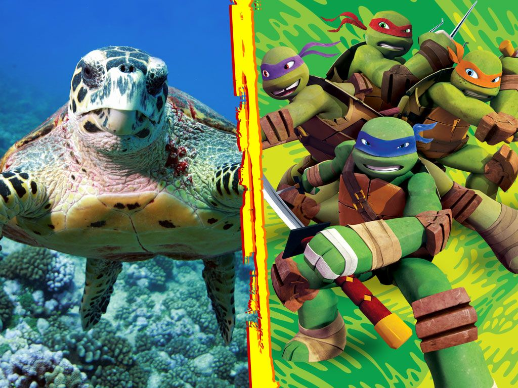 5 facts about ninja turtles